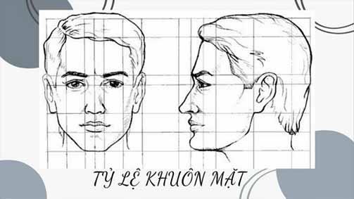 Phân chia vị trí và tỉ lệ các bộ phận trên khuôn mặt